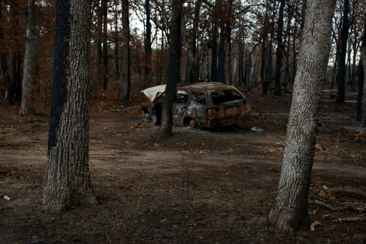 Photographed in or near Bastrop TX by David Kimelman in 2011.