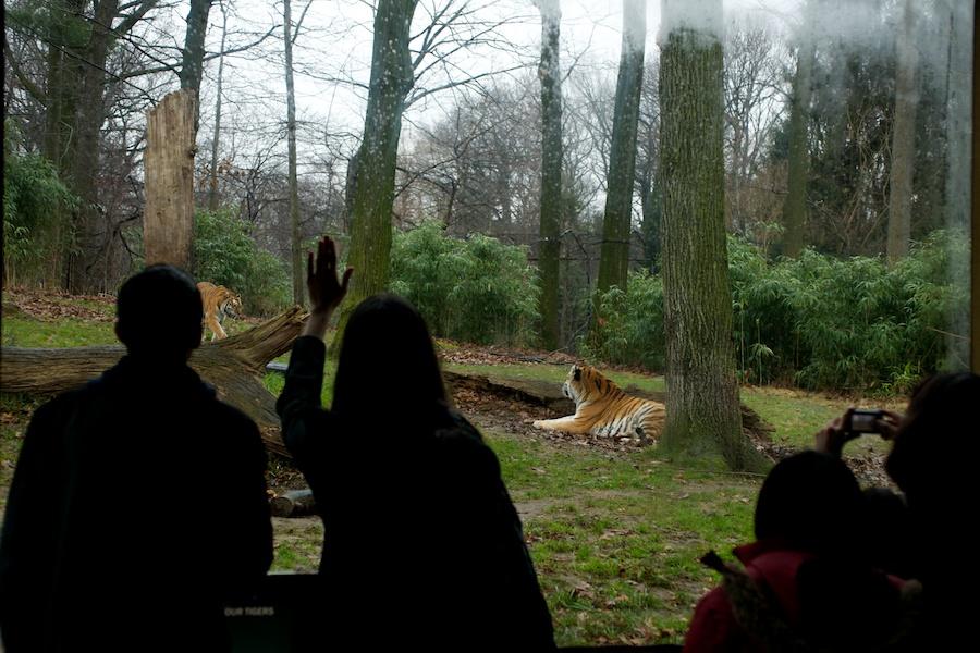 The Bronx Zoo —11