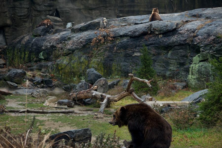 The Bronx Zoo —14