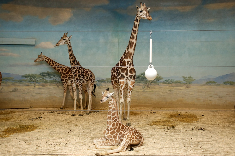 The Bronx Zoo —15