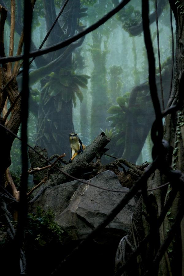 The Bronx Zoo —5