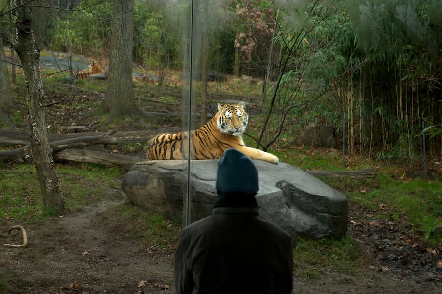 The Bronx Zoo —7
