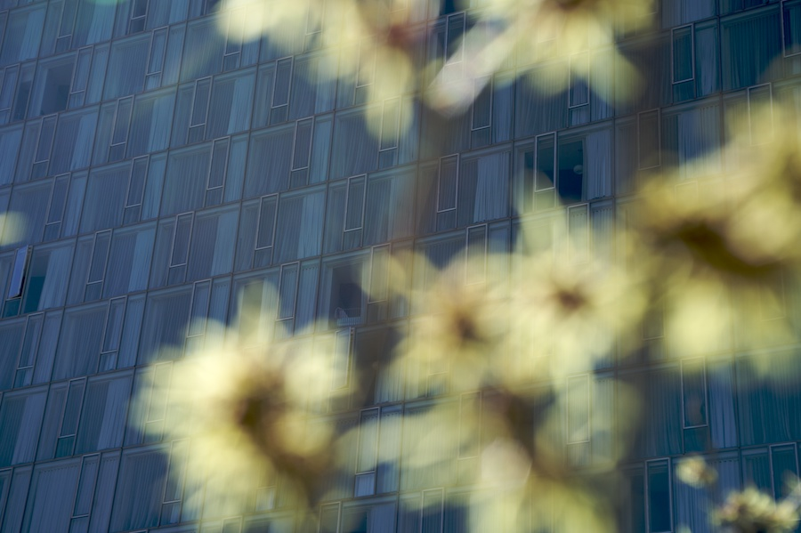 Park-Life-High-Line-Seasons-New-York-City-4