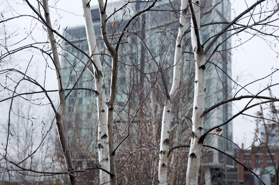 Park-Life-High-Line-Seasons-New-York-City-6