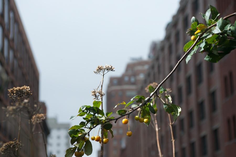 Park-Life-High-Line-Seasons-New-York-City-65
