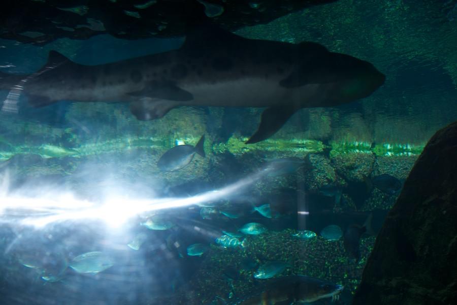 New York Aquarium — 14