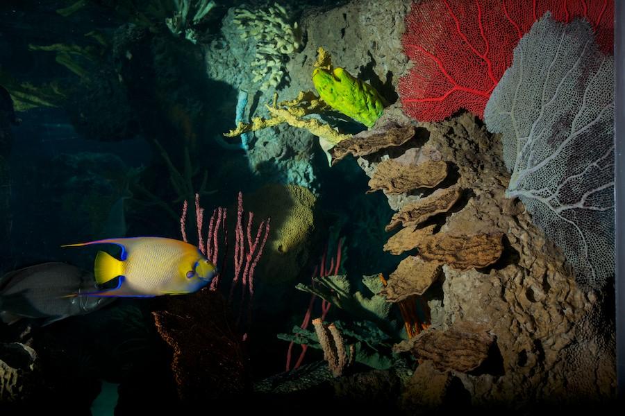 New York Aquarium — 17