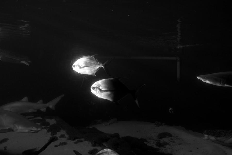 New York Aquarium — 19