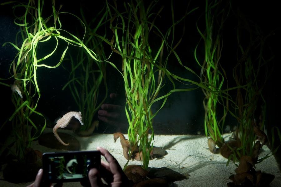 New York Aquarium — 22