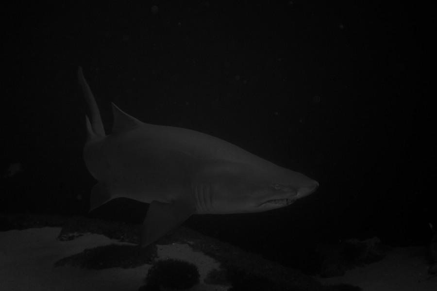 New York Aquarium — 3