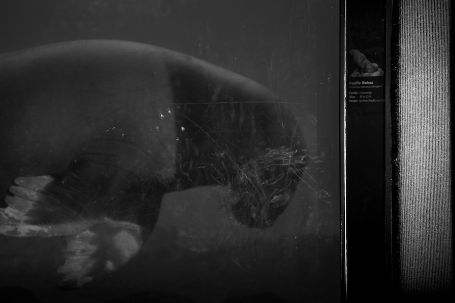 New York Aquarium — 8
