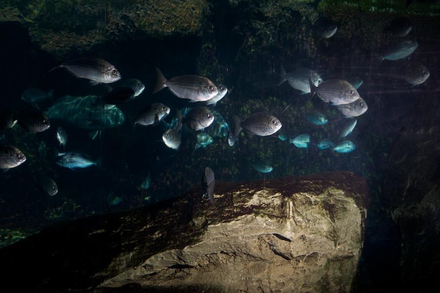 New York Aquarium — 9